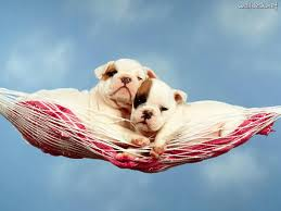 two dogs in basket
